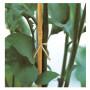 Verdemax 20 Tutori Canna in Bamboo Ciascuno con Altezza 240 Centimetri Diametro 18-20 mm
